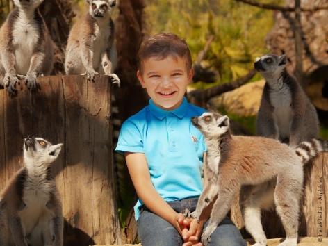 11-lemuriens-parcanimalierdespyrenees.jpg