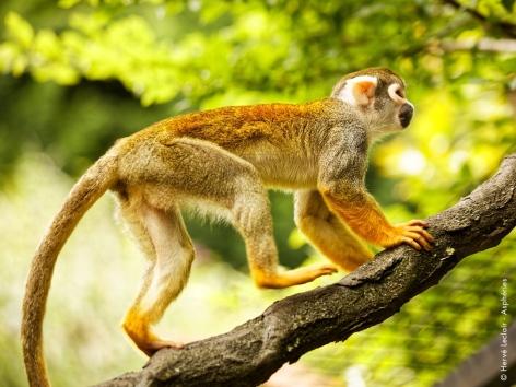 2-singes-parcanimalierdespyrenees.jpg