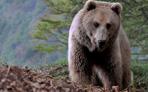 3-2016-parc-animalier-pyrenees-03-argeles-gazost.jpg