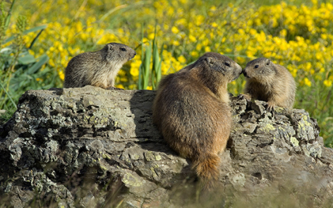 4-2016-parc-animalier-pyrenees-04-argeles-gazost.jpg