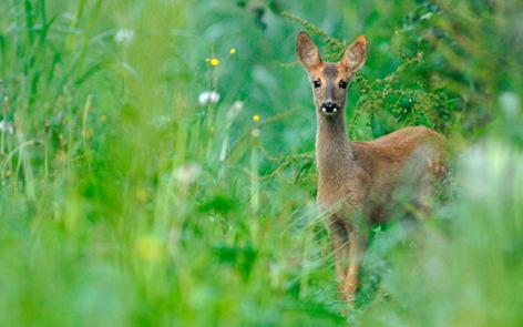 5-2016-parc-animalier-pyrenees-05-argeles-gazost.jpg