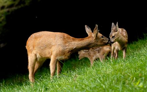 6-2016-parc-animalier-pyrenees-06-argeles-gazost.jpg