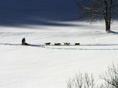3-5-Traineau-a-chiens.jpg