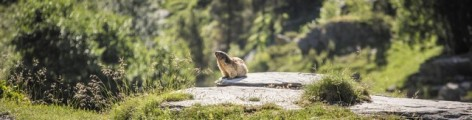 8-Marmotte-2.jpg