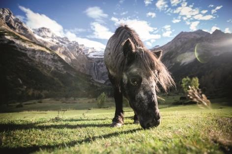 5-Gavarnie-cheval.jpg