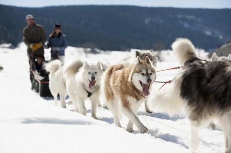 4-chiens-de-traineau-3.jpg