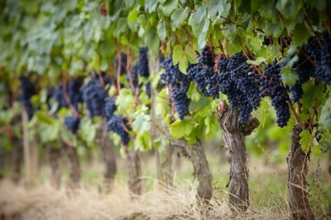 5-Madiran-Tannat-Maison-des-vins-BD.jpg