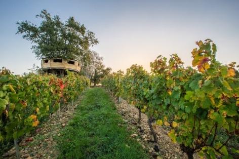 4-VIGNOBLE-BRUMONT---Chateau-Montus---Parcelle-de-La-Tyre--1-.jpg